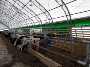 Коровники, каркасно-тентовое решение
